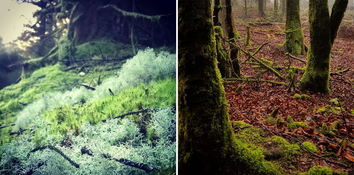 Images of March Brechfa Forest trees and moss