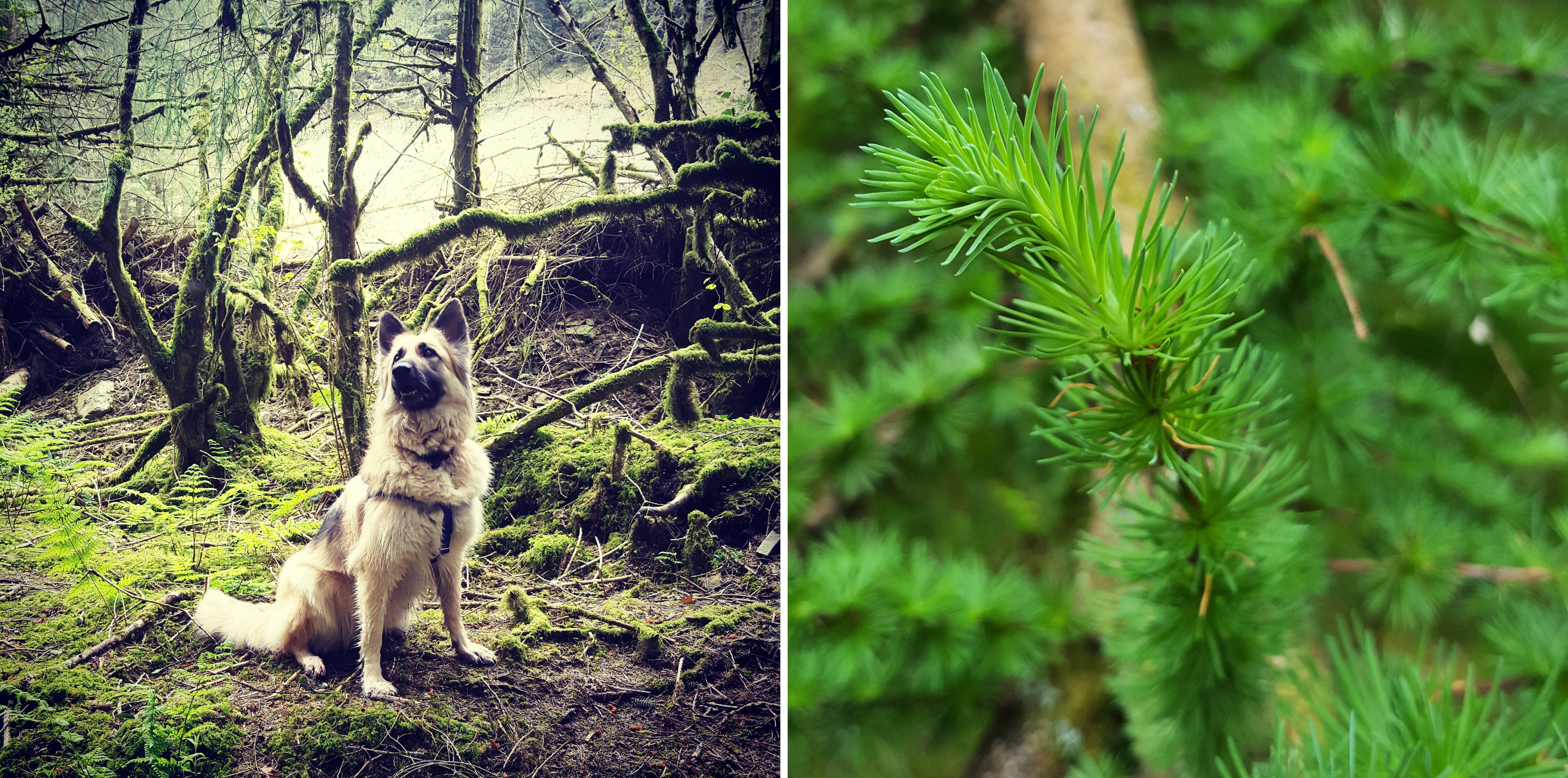 Images of May Brechfa Forest trees and a dog