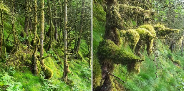 Images of June Brechfa Forest tees and moss