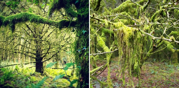 Images of August Brechfa Forest trees and moss