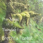 The Magic of Fairytale Forests – Brechfa Forest - The Last Krystallos