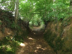 a sunken lane in La Meauffe, France, once a site of a 1944 World War II battle - although dating back further. Taken by Romain Bréget